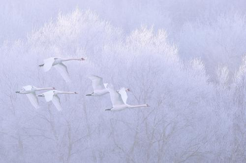 PDI Open Colour PAGB Gold Five Swans over Frosty Valley Paul Keene England