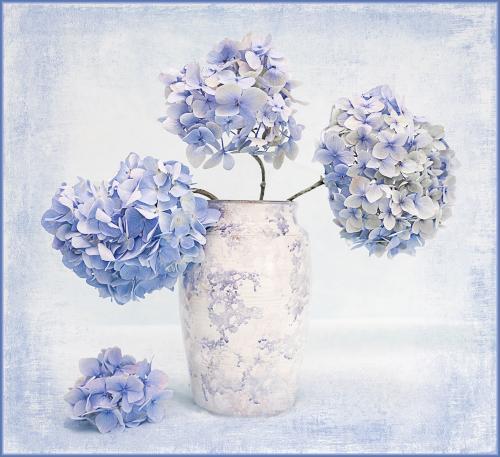 PDI Creative MCPF Ribbon Hydrangea Blue Gill Jones Wales
