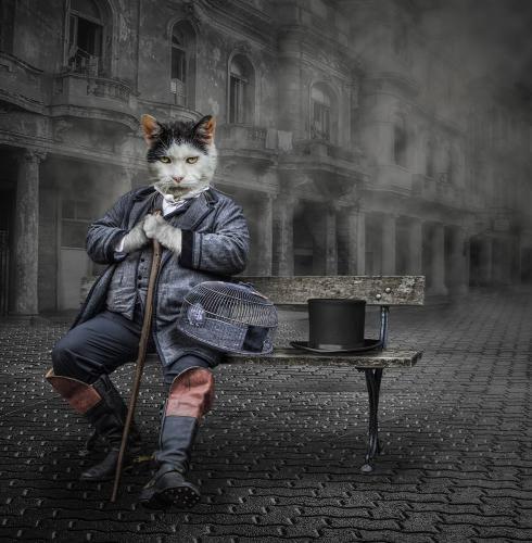 PDI Creative MCPF Ribbon Puss in Boots Corin Spinks England