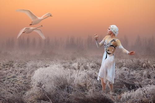 PDI Creative MCPF Ribbon The Swan Whisperer Paul Keene England
