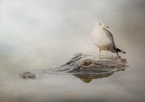 PDI Creative PAGB Ribbon Gator and the Gull Victoria Andrews England