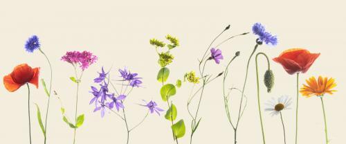 PDI Creative PSA Ribbon Wildflower Mix Trevor Clifford England