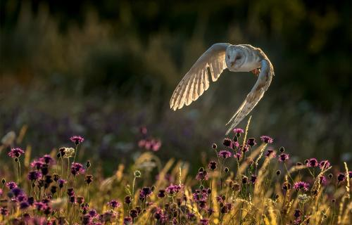PDI Nature MCPF Medal Summers Evening Search Carole Zimmerman England