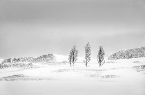 PDI Scapes GPU Ribbon Five Trees, Iceland Colin Westgate England