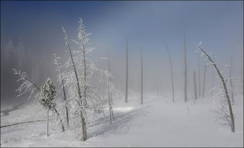 PDI Scapes MCPF Medal Paul Stanley Frosted trees Brian Davis England