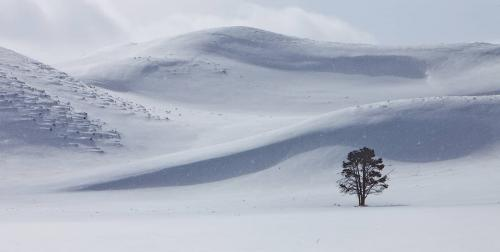 PDI Scapes PAGB Ribbon Lone Tree, Hayden Valley Kenny McLean Scotland