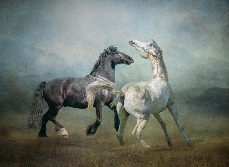 MCPF Ribbon - Horse Play - Lynda Haney DPAGB BPE5 AFIAP - England