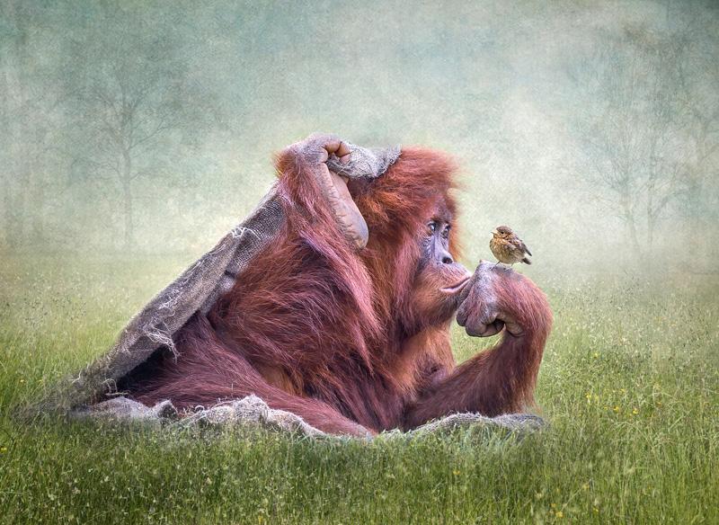 FIAP Gold - Sing Little Birdie - Lynda Haney DPAGB BPE5 AFIAP - England