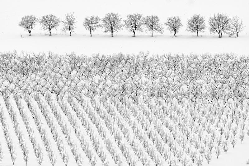 GPU Gold - Winter Trees - Anatolie Poiata AFIAP - Moldova
