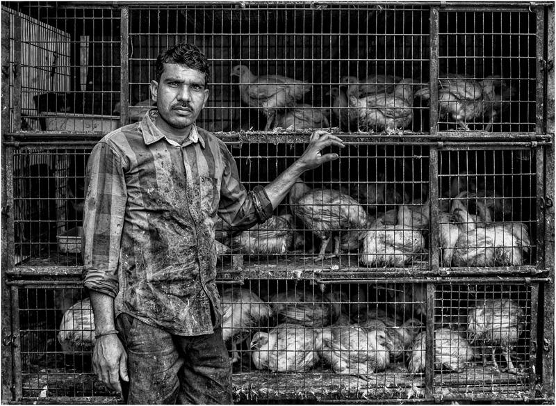 PAGB Ribbon - The Chicken Man - Charles Ashton DPAGB ARPS EFIAP BPE3 - England 1