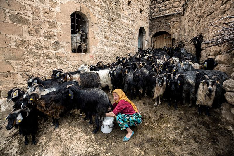 PSA Bronze - Dairy Farm - Buket Ozatay EFIAPP - Cyprus